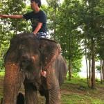 国家資格?ラオスで象使いの免許を取得してきた