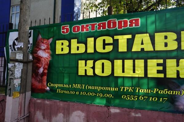 猫品評会フェスタポスター