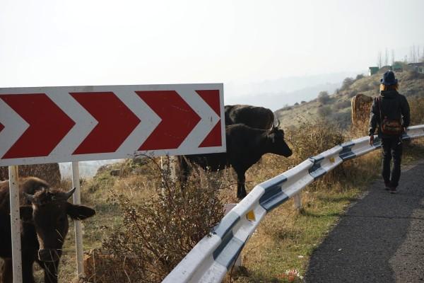 牛がいっぱい2