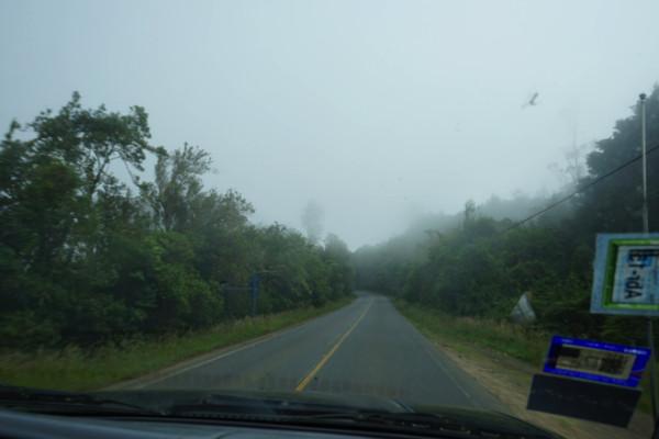 霧が立ち込める