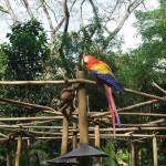 サンホセのシモン・ボリバル動物園に行ってきた
