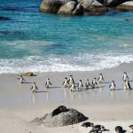 ケープタウン|ボルダーズビーチのペンギンと絶品フィッシュアンドチップス