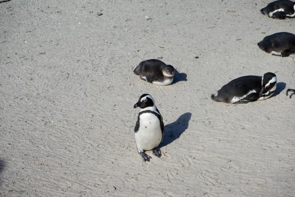 ペンギン立ち