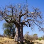 カサネ(ボツワナ)からウィントフック(ナミビア)への行き方